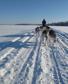10km dog sledding tour with snack