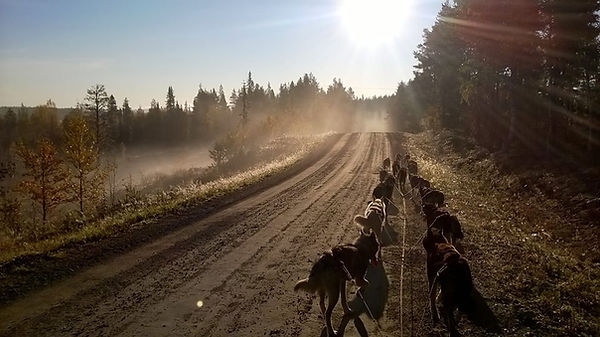 autumn training in the beautiful morning sun. 16 dogs per team on our ATV