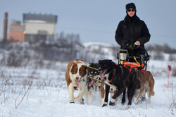 Pasvik Trail 2014