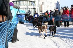 Finnmarkslopet 500km: Start in Alta