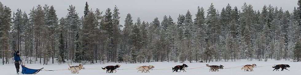 14 dog racing team for finnmarkslopet