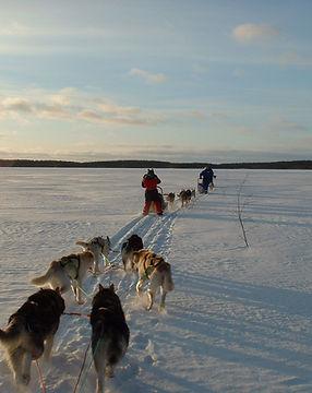 5km Husky Safaris in Kuusamo