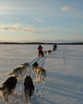 5km Husky Safaris in Kuusamo