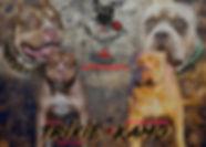 Trixie xXx Kamo Banner 1.jpg