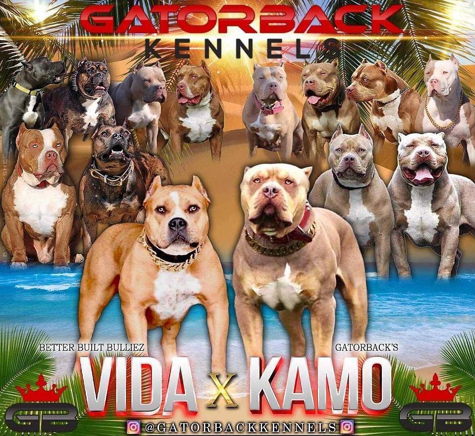 Kamo x Vida Banner.jpg