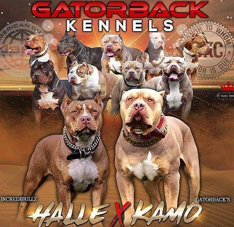 Kamo x Halle Banner.png