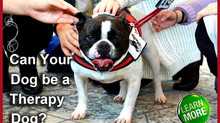 The Difference Between Service Dogs, Therapy Dogs & Emotional Support Dogs