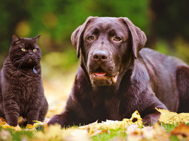 Why Give Omega 3 Oils to Your Dog?