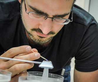 Tomer Czaczkes marking ants at a sugar feeder