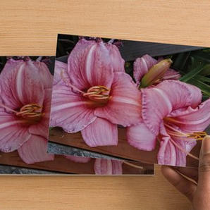 Post Card 4x5