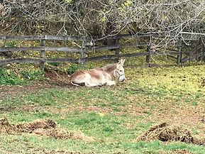 Donkey5.jpg
