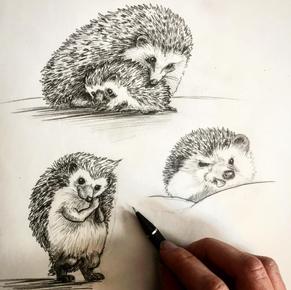 Hedgehog Sketch, Meg Lemieur