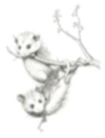 MLemieur_opossums_web.jpg