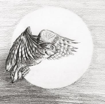 Owl Sketch, Meg Lemieur