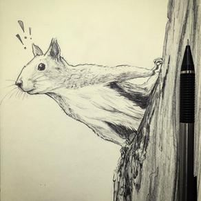 Squirrel Sketch, Meg Lemieur