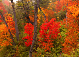 Best places to see Autumn forest colours around Pucón