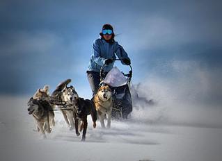 Trineos tirados por perros : Una actividad perfecta para este invierno en Pucón, Chile
