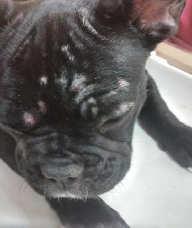 dermatoligia-veterinaria-clinica-veterin