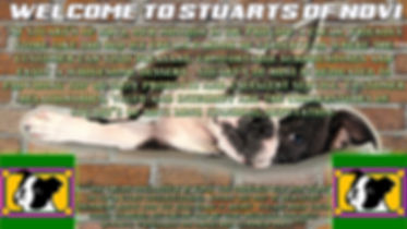 welcome to stuart's2.jpg