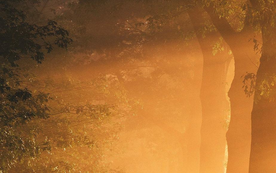 light background.jpg
