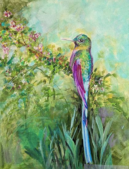 Hummingbird Longtailed Sylph