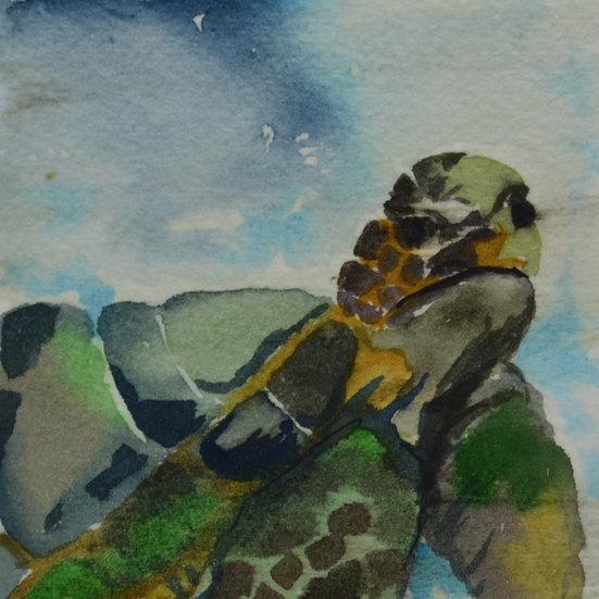 Turtle on Canvas