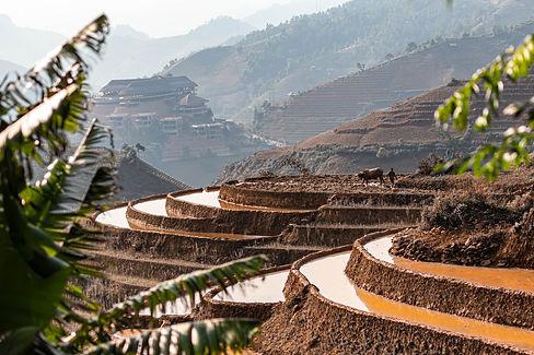 Rijstvelden van Vietnam-7778.jpg