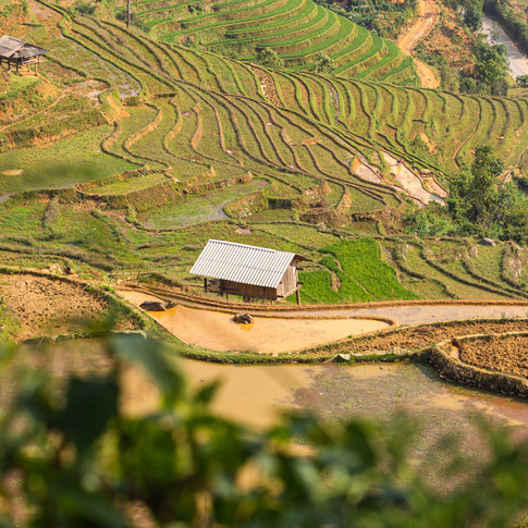Uitzicht over de rijstvelden van Vietnam