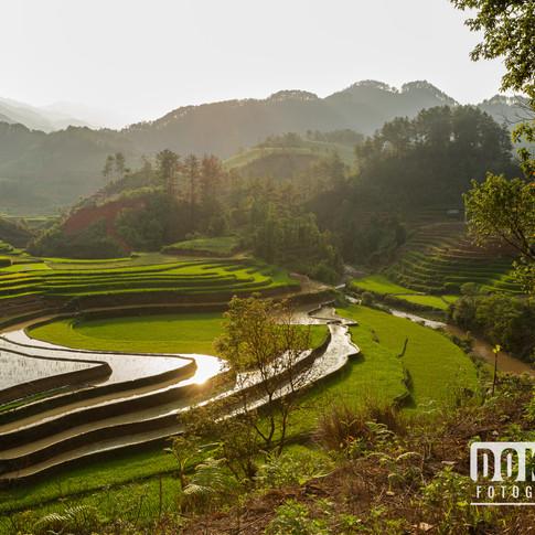 rijstvelden in Vietnam II
