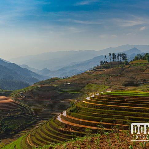 Rijstvelden in Vietnam I
