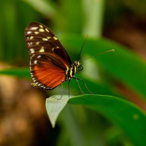 Vlinder op de uitkijk
