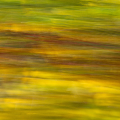 Beweging in de bladeren