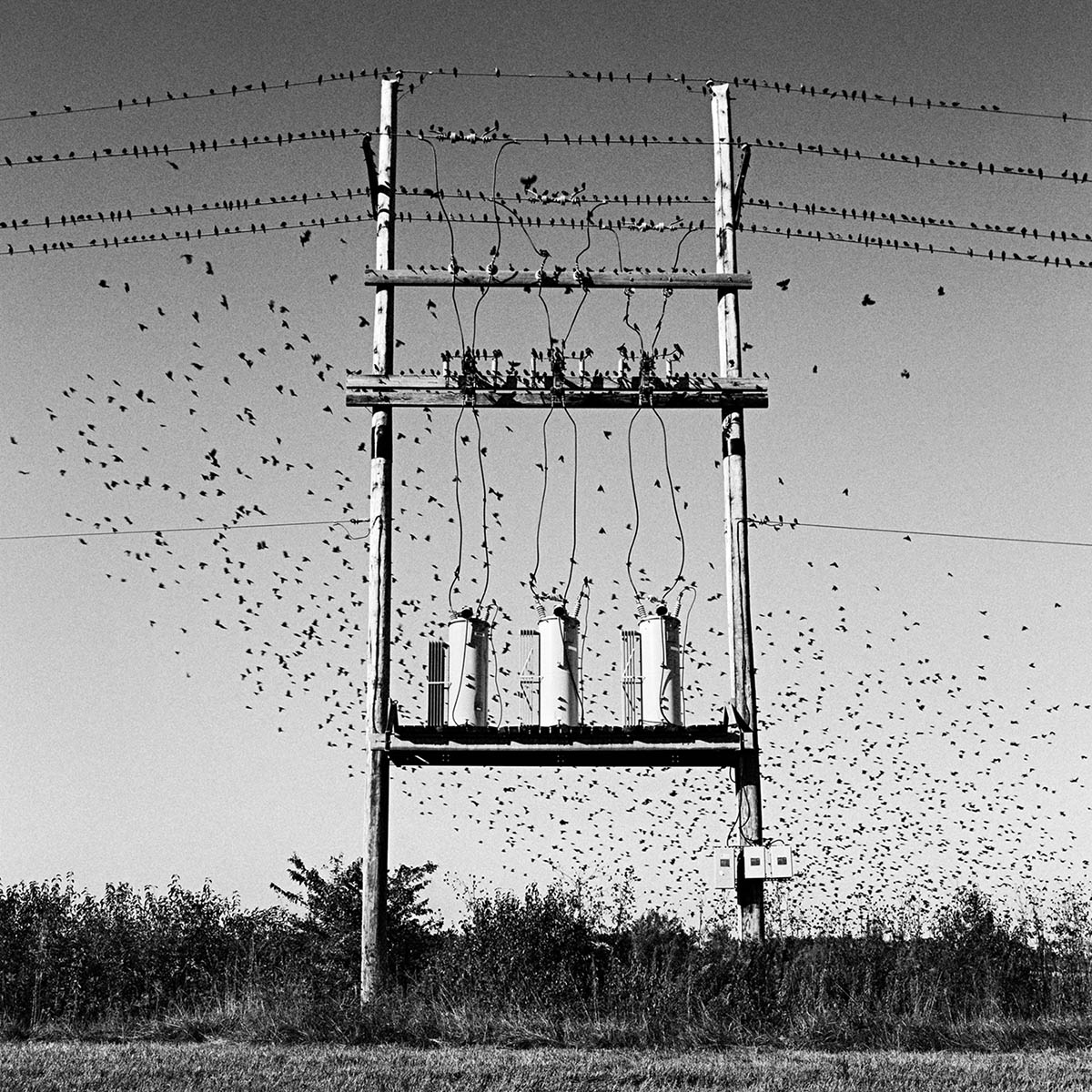 Birds & Transformers, Missouri, 1997