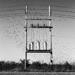 Birds & Transformers, Missouri, 1997