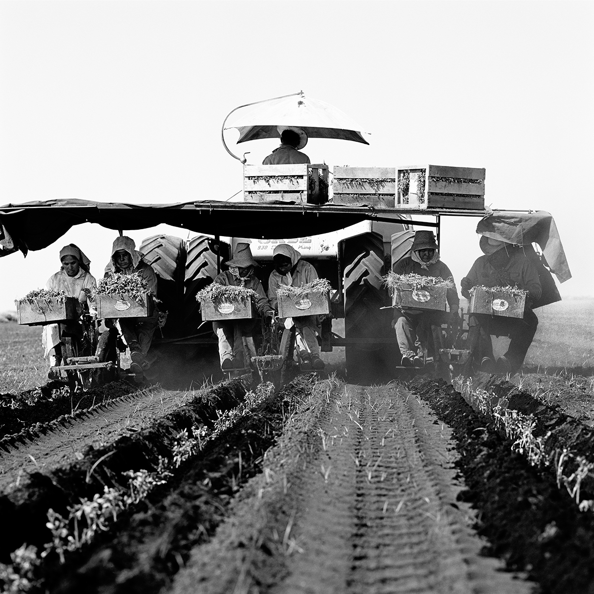 Tomato Planting, 1968