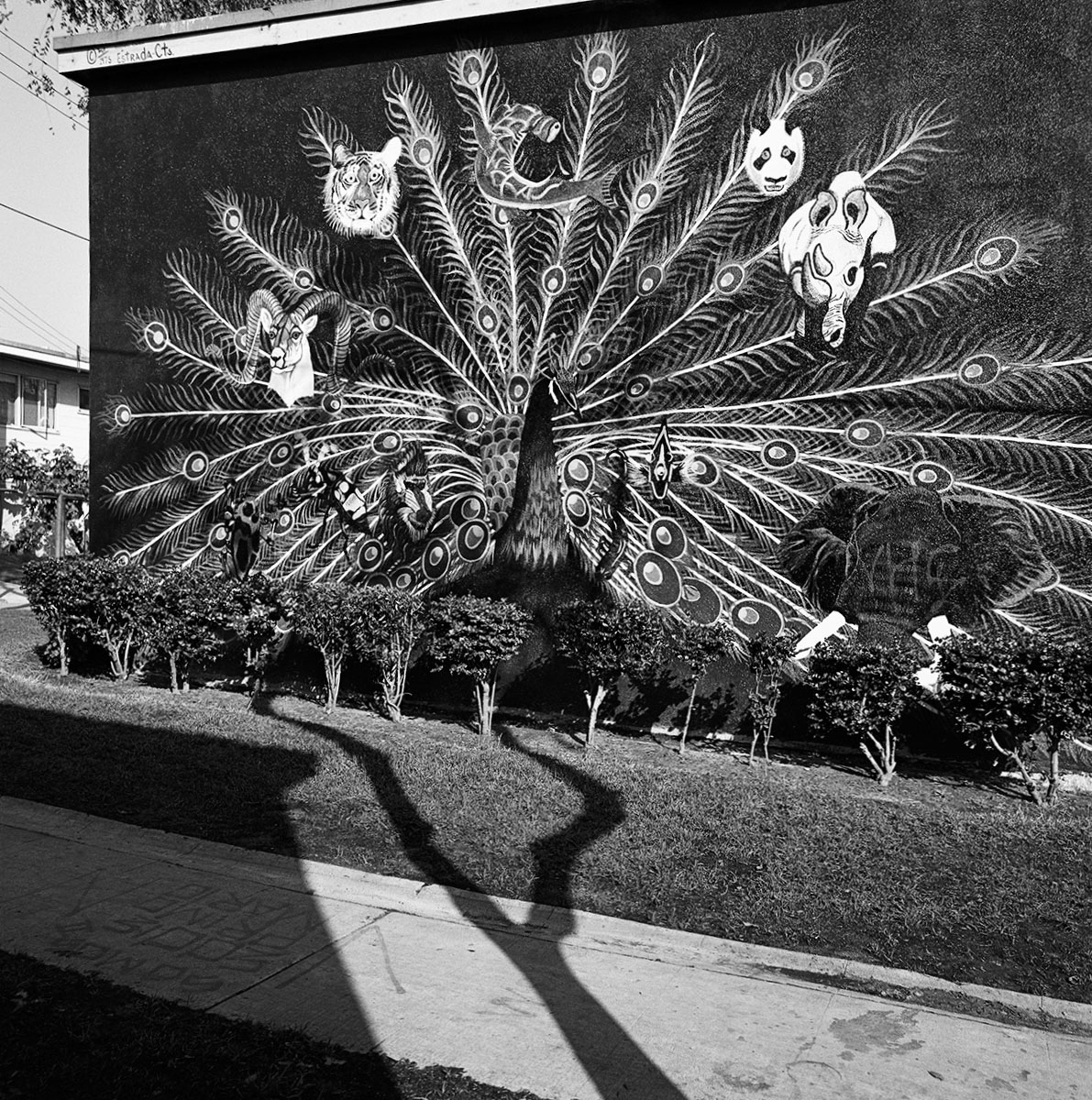 Peacock Mural, East Los Angeles, 1978