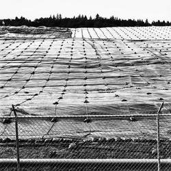 Landfill near Eugene, Oregon, 1996