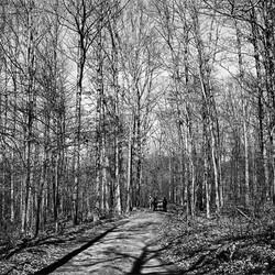 White Oak Trees, 1970