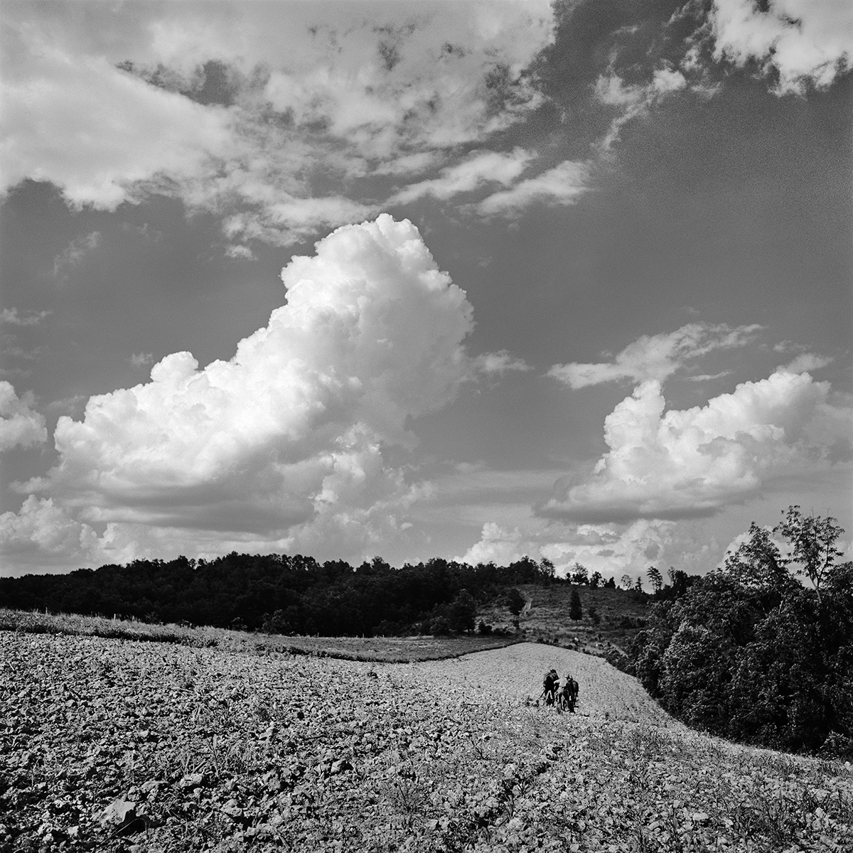 Ed Stilley Plowing Hilltop Field, 1973