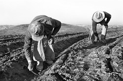 Two Fieldworkers Weeding, 1979
