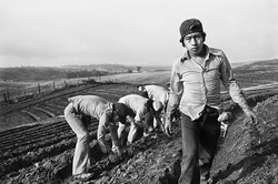 Fieldworker with Lunch Sack Tied to Waist, 1979
