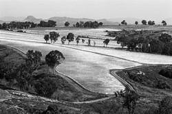 Plastic Covered Tomato Field #2, 1979