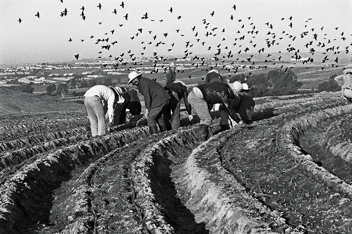 Fieldworkers & Birds, 1979