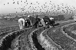 Fieldworkers & Birds, 1979
