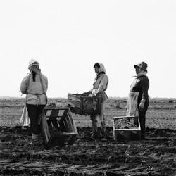 Farmworkers with Tomato Crates, 1969