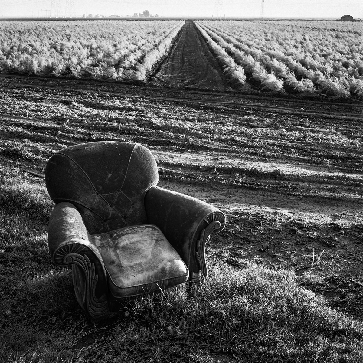 Chair & Asparagus Field, 1967