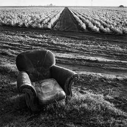 Chair & Asparagus Field, 1967