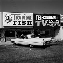 Shopping Plaza, 1975