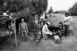 Fieldworkers Camped Under Pepper Tree, 1979