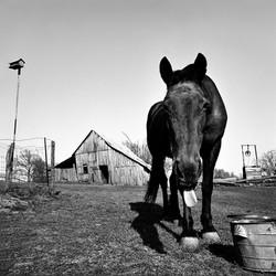 Miller Family Horse, 1970
